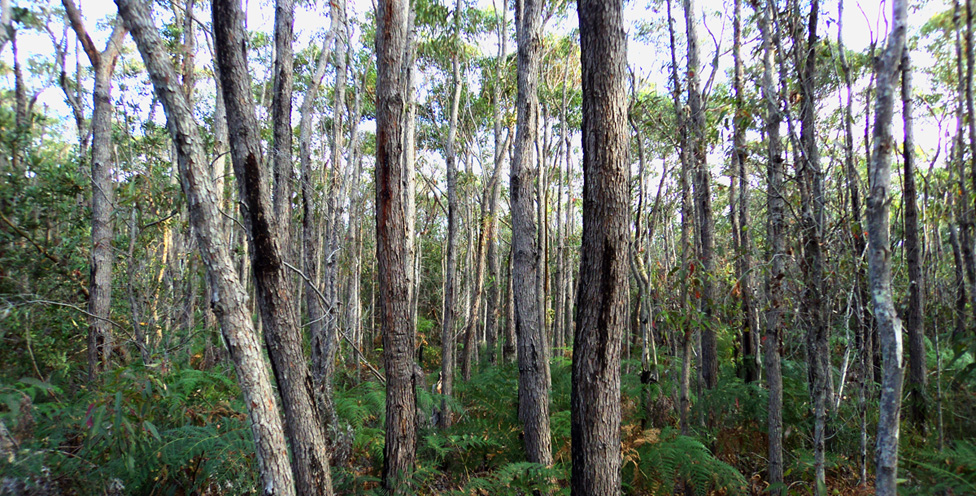 Bloodwoods, Spring Gully