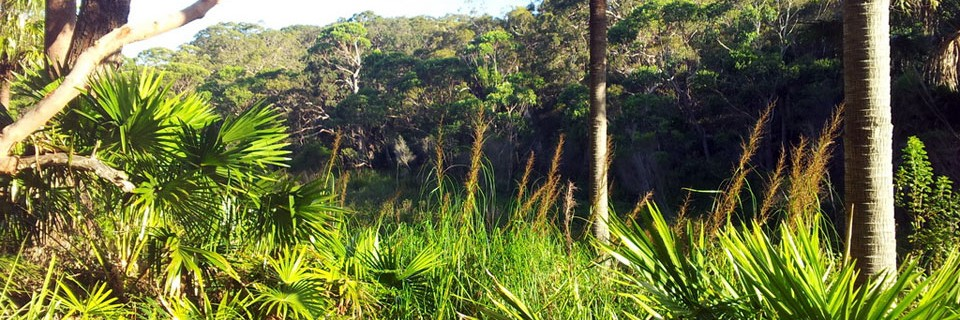 Sydney Freshwater Wetland and Coastal Sand Bangalay Forest, Spring Gully, Bundeena.